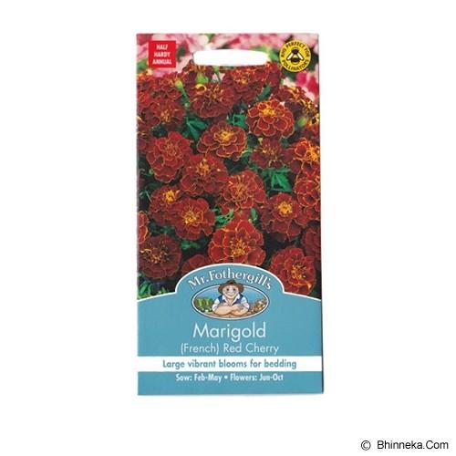 MR FOTHERGILLS Marigold (French) Red Cherry - Bibit / Benih Tanaman Hias