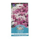 MR FOTHERGILLS Candytuft Fairy Mixed - Bibit / Benih Tanaman Hias