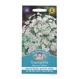 MR FOTHERGILLS Gypsophila Monarch - White