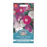 MR FOTHERGILLS Morning Glory Choice Mixed - Bibit / Benih Tanaman Hias