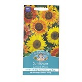 MR FOTHERGILLS Sunflower Sunburst - Bibit / Benih Tanaman Hias