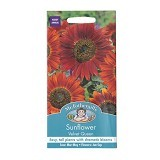 MR FOTHERGILLS Sunflower Velvet Queen - Bibit / Benih Tanaman Hias