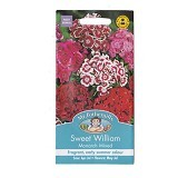 MR FOTHERGILLS Sweet William Monarch Mixed