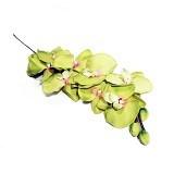 OHOME Bunga Anggrek Bulan Artificial Dekorasi Interior Eksterior Ruangan [AN-B000313H] - Green (Merchant) - Tanaman Buatan/Artificial