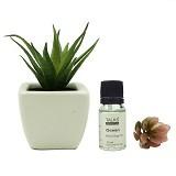 TAKI Cactus Pot Diffuser 10ml with Aloe Vera [AR-41A] - Ocean Mist - Aromatherapy / Lilin Terapi