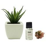 TAKI Cactus Pot Diffuser 10ml with Aloe Vera [AR-41A] - Lavender - Aromatherapy / Lilin Terapi