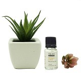 TAKI Cactus Pot Diffuser 10ml with Aloe Vera [AR-41A] - Ginger Lime - Aromatherapy / Lilin Terapi