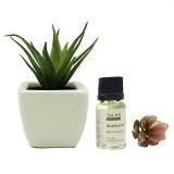 TAKI Cactus Pot Diffuser 10ml with Aloe Vera [AR-41A] - Sakura - Aromatherapy / Lilin Terapi