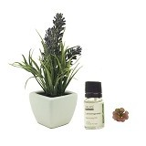 TAKI Cactus Pot Diffuser 10ml with Oil Lavender [AR-41C] - Lemon Grass - Aromatherapy / Lilin Terapi